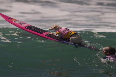 """Surf City Surf Dog Competition"": Surfende Hunde in Kalifornien"